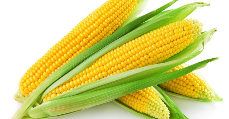 differences between Corn And Maize
